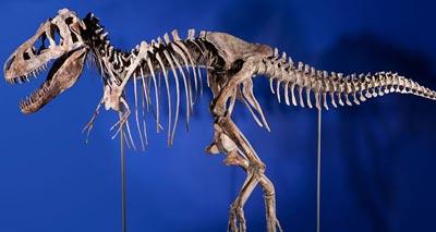 بيع هيكل عظمي لديناصور بمليون دولار في نيويورك