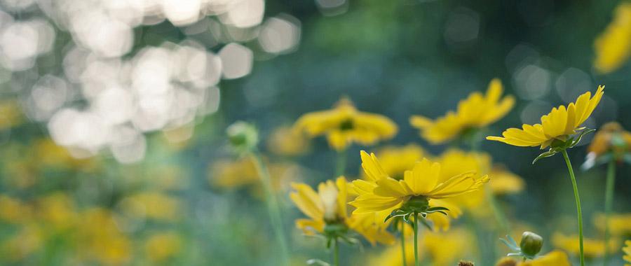 التغيرات المناخية وتأثيرها السلبي على النباتات