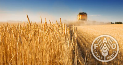 حسب «الفاو»: استمرار الجوع يحول دون تحقيق تنمية مستدامة