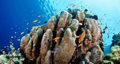 أستراليا بصدد إنشاء أكبر شبكة محميات بحرية