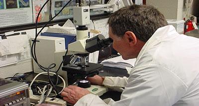 تداعيات انتصار البكتيريا على المضادات