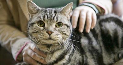 فضلات القطط على صلة بمعدلات انتحار النساء