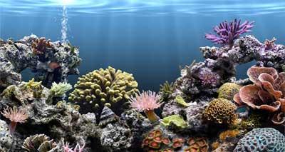 التخصيب الصناعي في أعماق المحيط
