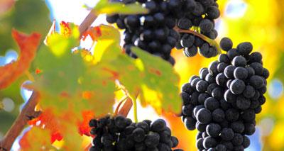 العنب وصحة القلب