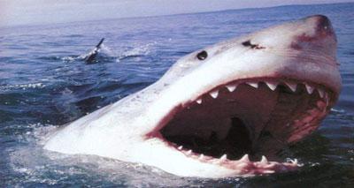 المدافعون عن البيئة يطالبون بحماية القرش الأبيض المهدد بالانقراض
