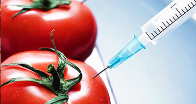 التحوير الوراثي وخطره على البيئة والصحة