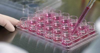 علاج واعد للصمم بالخلايا الجذعية