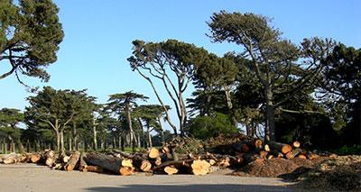 القطع العشوائي للأشجار