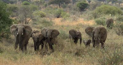 «دعوات دولية لتوسيع قائمة الكائنات «المحمية