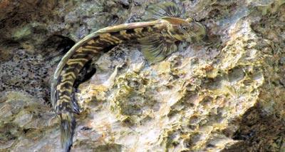 كائنات مائية تتحرك على اليابسة