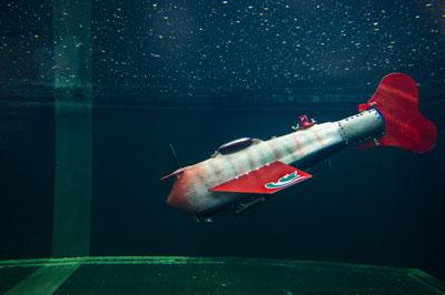 سمكة إلكترونية تسبح في الأنهار وتجمع معلومات