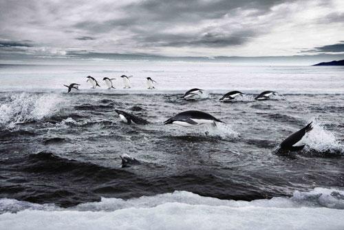 محميات بحرية بالقطب الجنوبي