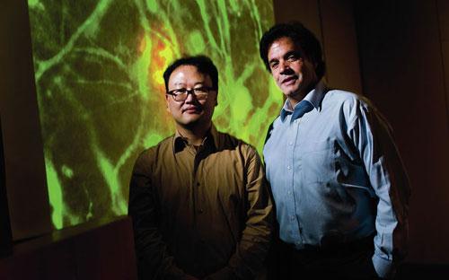 إنجاز علمي بمحاكاة خلايا مخ بشري لأبحاث الزهايمر
