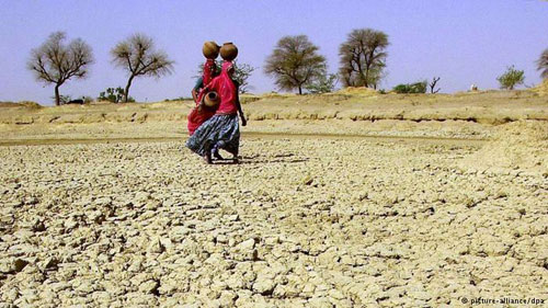 ارتفاع الملوحة يسبب خسائر هائلة في الأراضي الزراعية
