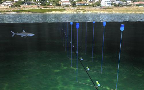 جنوب افريقيا تختبر تقنية لابعاد اسماك القرش دون الاضرار بها