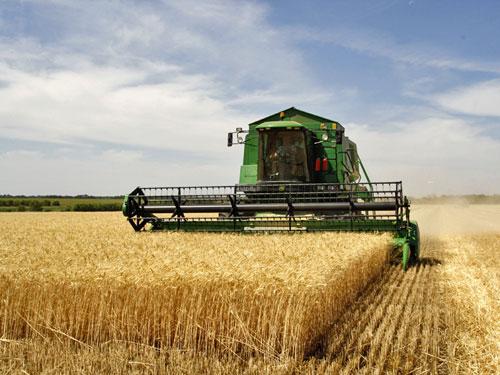 المخلفات الزراعية تمثل خطرًا كبيرًا على البيئة