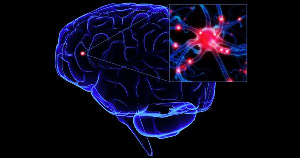 Scientists find brain mechanism behind glucose greed