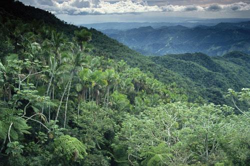 إزالة الغابات المدارية تهدد إنتاج الغذاء العالمي