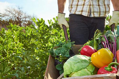 الزراعة العضوية ليست مستدامة