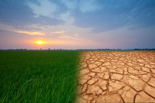 الامم المتحدة: التغير المناخي يهدد التنوع الوراثي