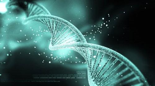 Study: DNA trick cripples bacteria that escape confinement