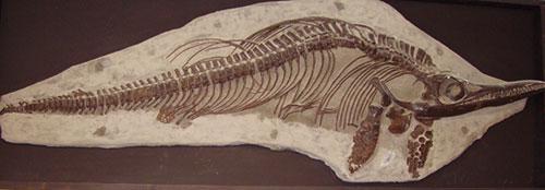 اكتشاف أحد الزواحف البحرية النادرة في اسكتلندا