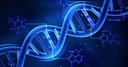 Des modifications chimiques de l'ADN pourraient révéler notre espérance de vie