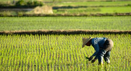 باحثون: صغار المزارعين هم مفتاح التنوع الوراثي في البذور