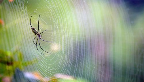 اكتشاف نسيج طبيعي أقوى من خيوط العنكبوت