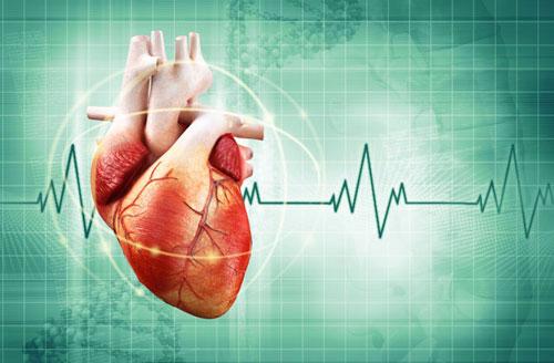 تخزين تسجيلات ثلاثية الأبعاد لـ1600 قلب لإعداد دراسة