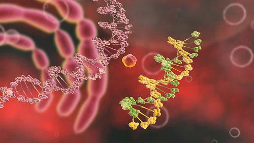 لقاح جديد لعلاج الإيدز عن طريق تغيير خلايا الحمض النووي