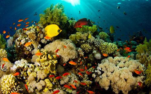 الصندوق العالمي لصون الطبيعة يحث على حماية الحاجز المرجاني العظيم