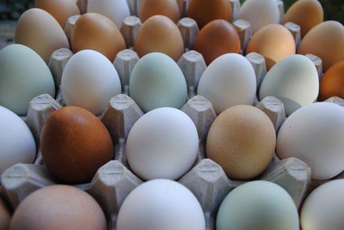يازاماتا.. بيض ياباني بطعم ورائحة الفاكهة
