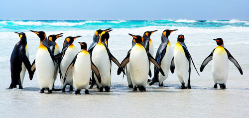 Penguins can barely taste anything at all, study finds