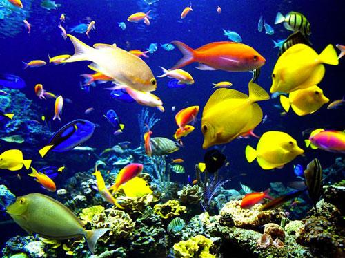 اكتشاف 1500 نوع من الكائنات البحرية في المحيطات