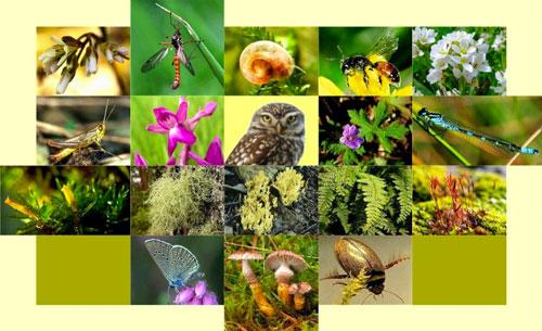 ثمن التنوع البيولوجي