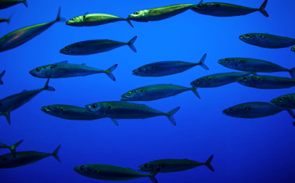 Study finds some fish can live in low-oxygen dead zones