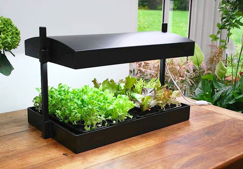 أبحاث بريطانية: ضوء الليل الاصطناعى يؤثر سلبا على نمو النباتات