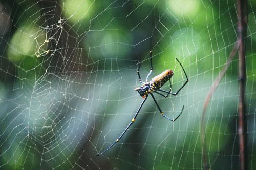 سم العناكب قد يكون مصدرا لأقوى مسكنات الألم