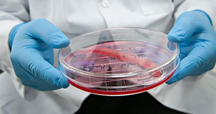 Cellules artificielles : des chercheurs ont trouvé comment le faire « respiere »