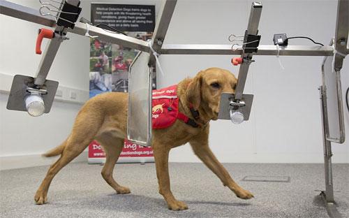 دراسة: الكلاب قادرة على تشخيص سرطان البروستات بنسبة 98%