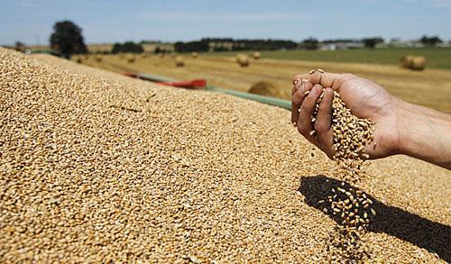 كيف نضمن توفير الغذاء للبشرية بحلول عام 2050؟