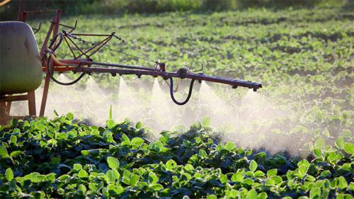 تقرير: مبيدات الآفات تضر بالكائنات التي تسهم في تلقيح المحاصيل