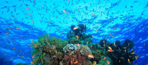 علماء: حموضة المحيطات مسؤولة عن أسوأ انقراض للكائنات على وجه الارض