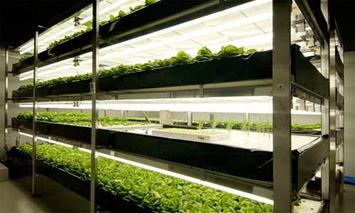 تطوير زراعة تعتمد على الضوء الصناعي