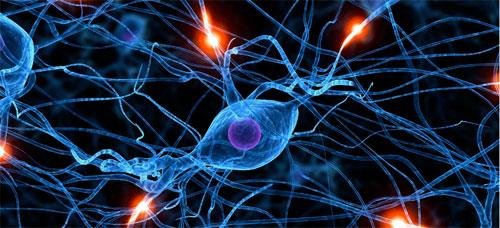 علماء: العدوانية سببها موت خلايا الدماغ