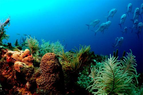 تقرير: قيمة محيطات العالم 24 تريليون دولار