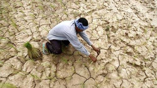 الجفاف يفرغ سلة غذاء الجنوب الأفريقي
