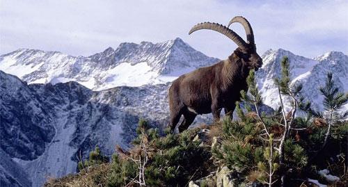 دراسة: تضخم قائمة المخلوقات والنباتات المهددة بالانقراض.. والتمدن من أهم الأسباب
