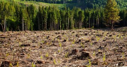La déforestation de la planète se poursuit mais à un rythme ralenti, selon l'ONU